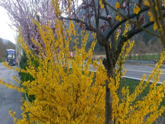 Bäume blühen